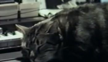 cat-marker